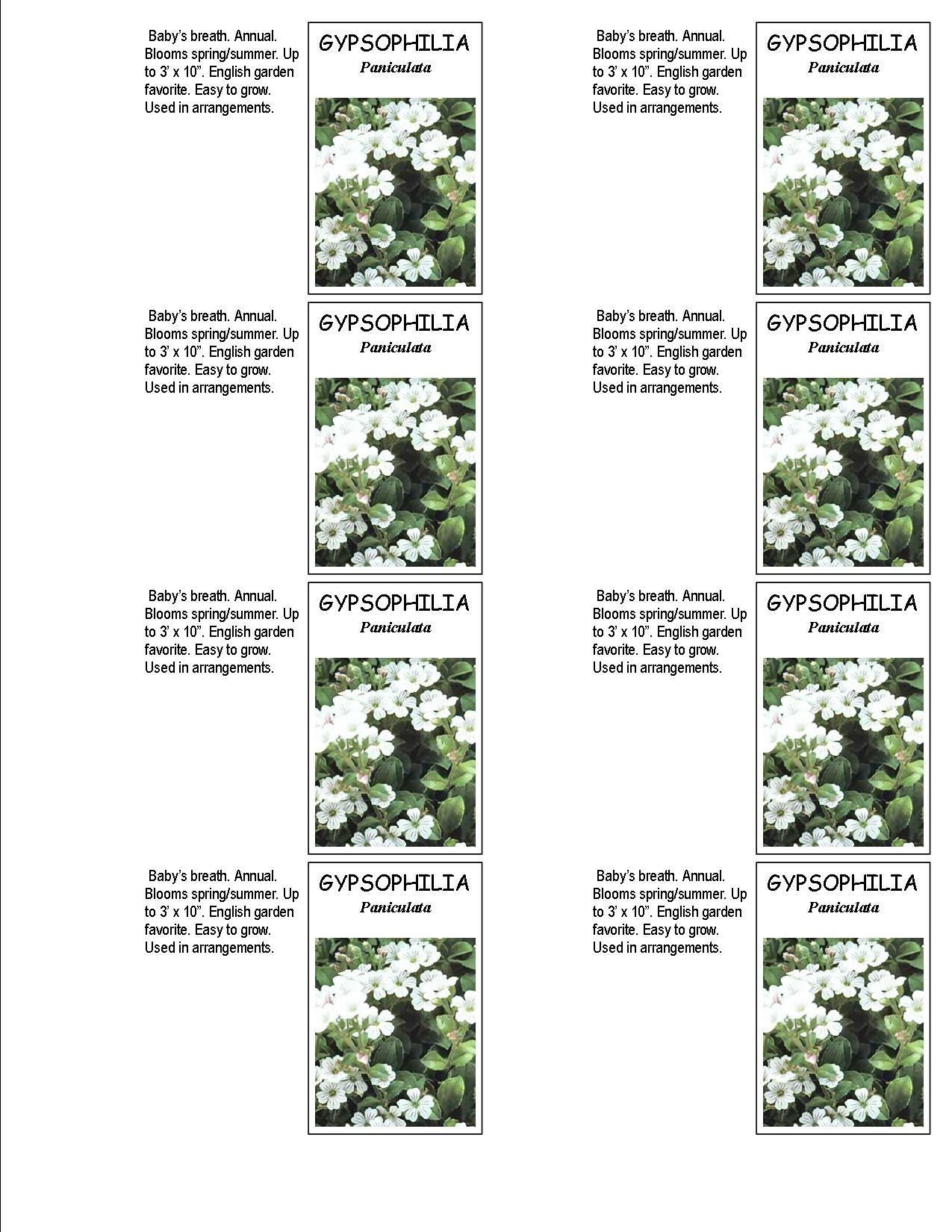 Gypsophilia Baby S Breath Seed Envelopes Babys Breath Flower Garden English Garden