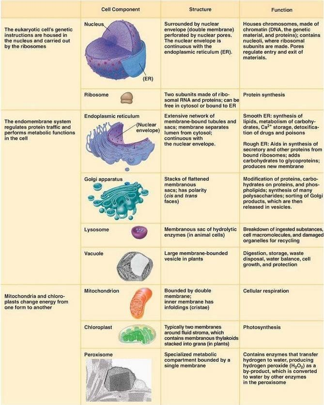 Qualified Cell Organelles With Their Functions Animal Cell ...