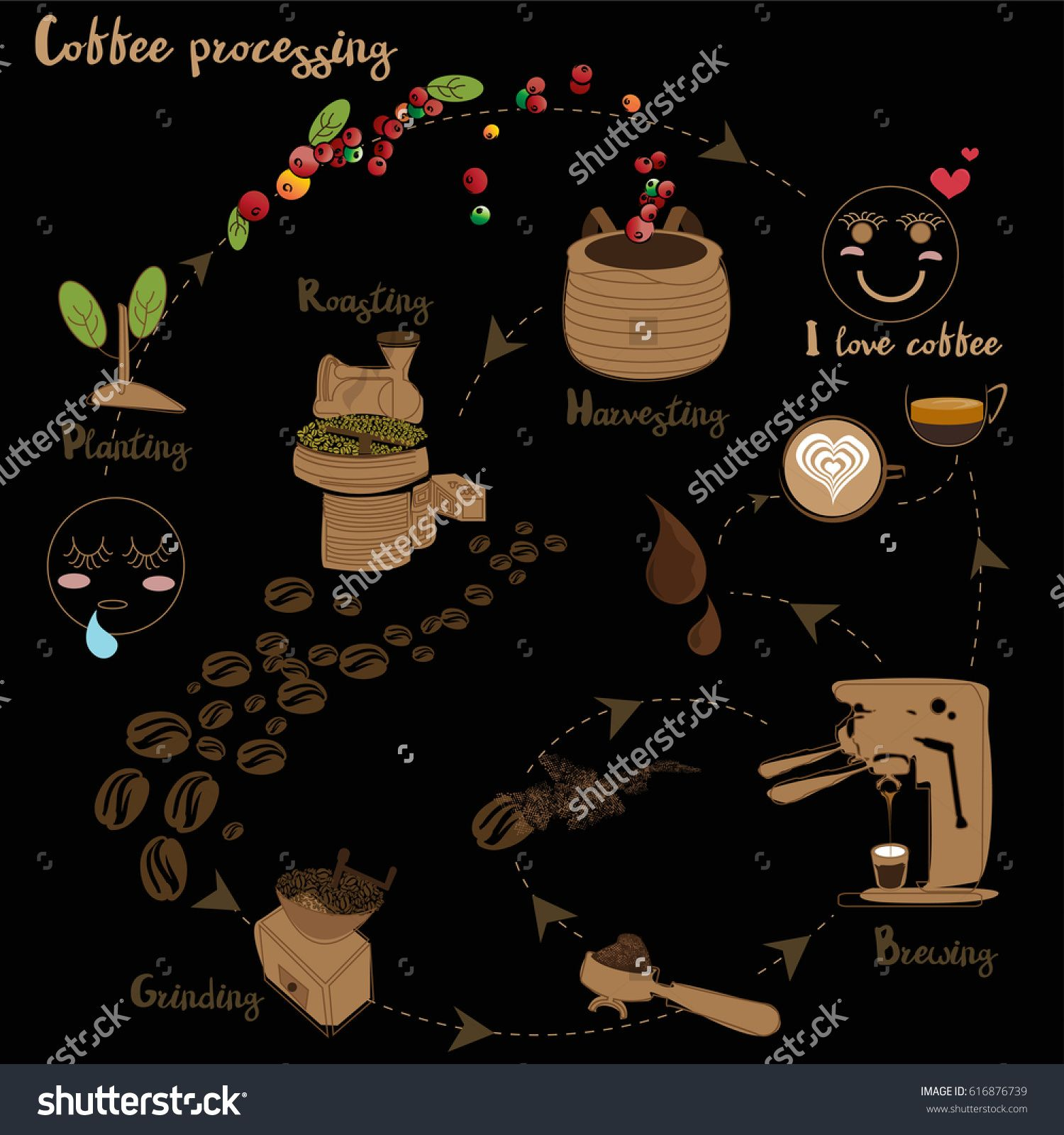 coffee processing step by step Инфографика, Кофе