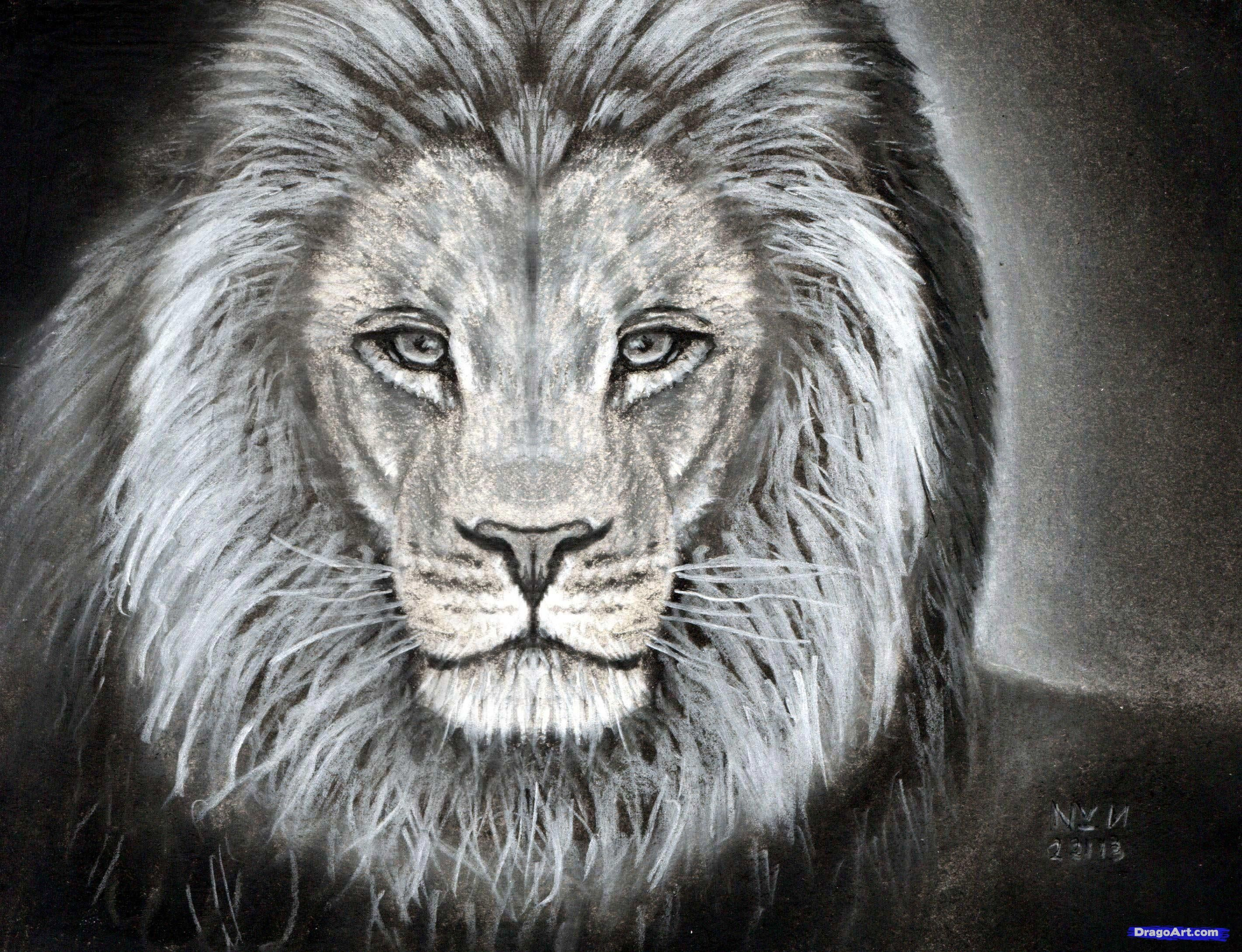 How to Sketch a Lion, Step by Step, safari animals, Animals, FREE ...