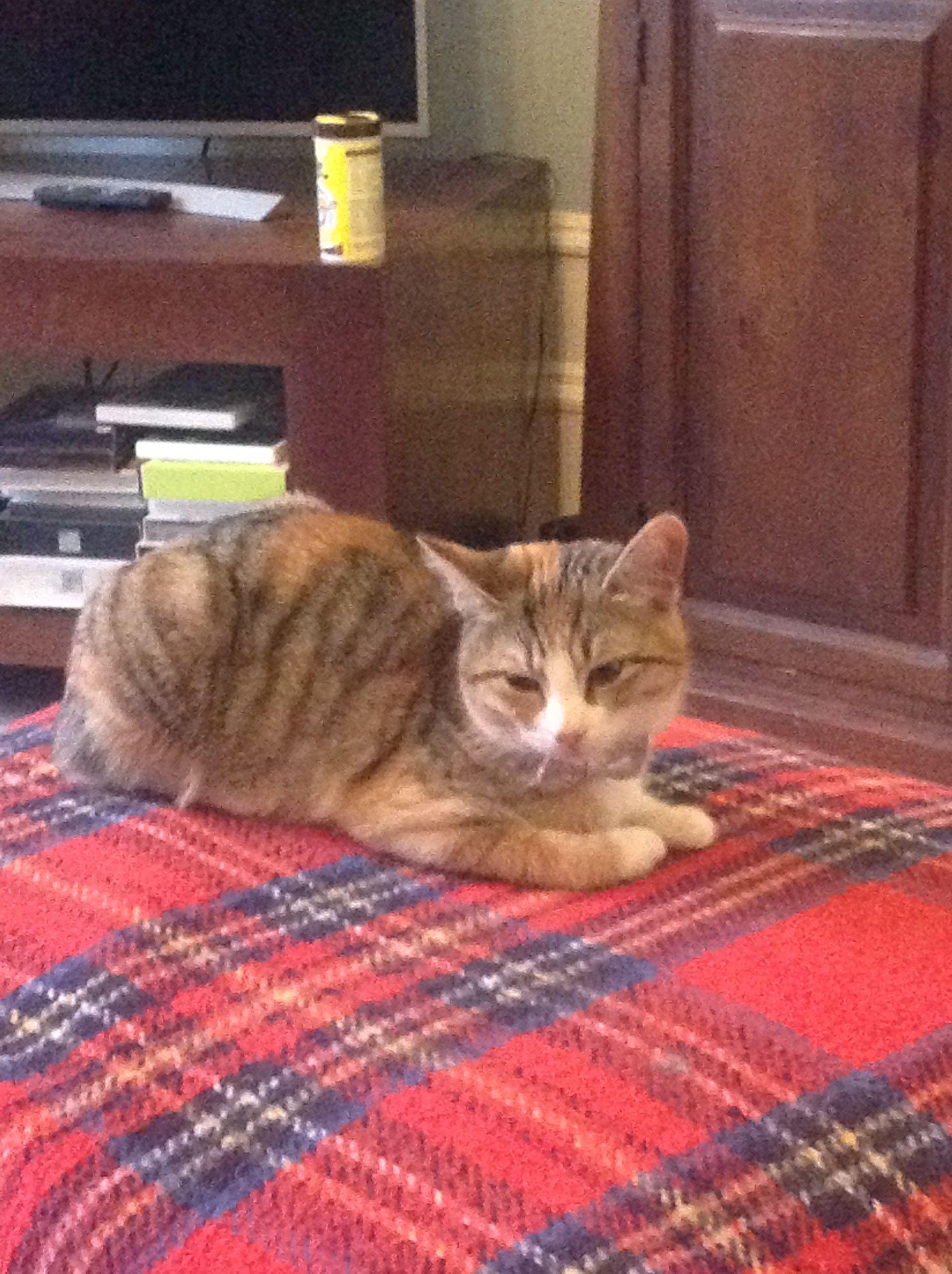 Tartan Travel Rug With Cat Cats