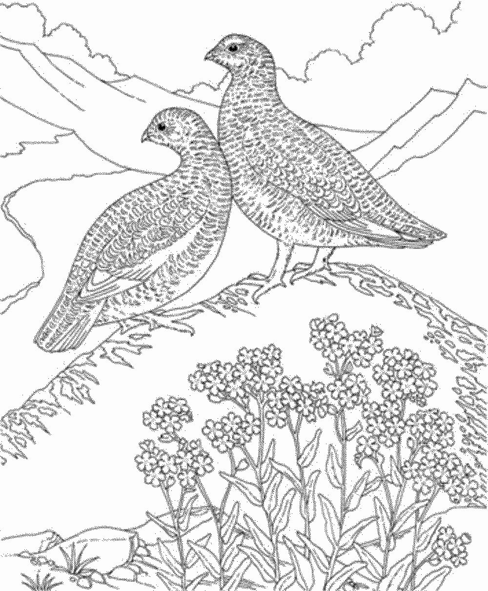 Bird Coloring Book For Adults Awesome Hard Bird Coloring Pages For