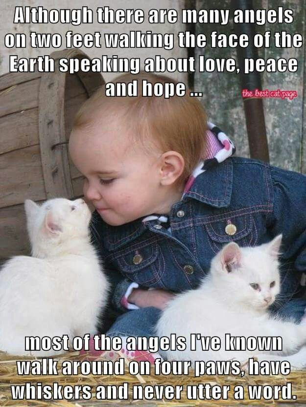 Miu n Sweetie | Cats & Kittens | Animals, Cats, Cats, kittens