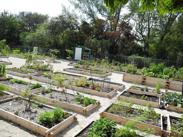 Mid Beach Community Garden | Garden planning, Florida ...