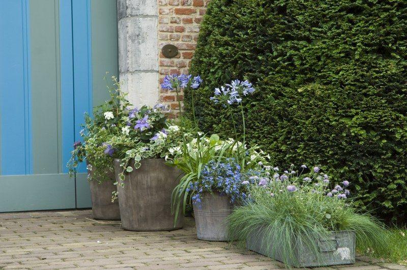 Vaste planten voor bloembakken