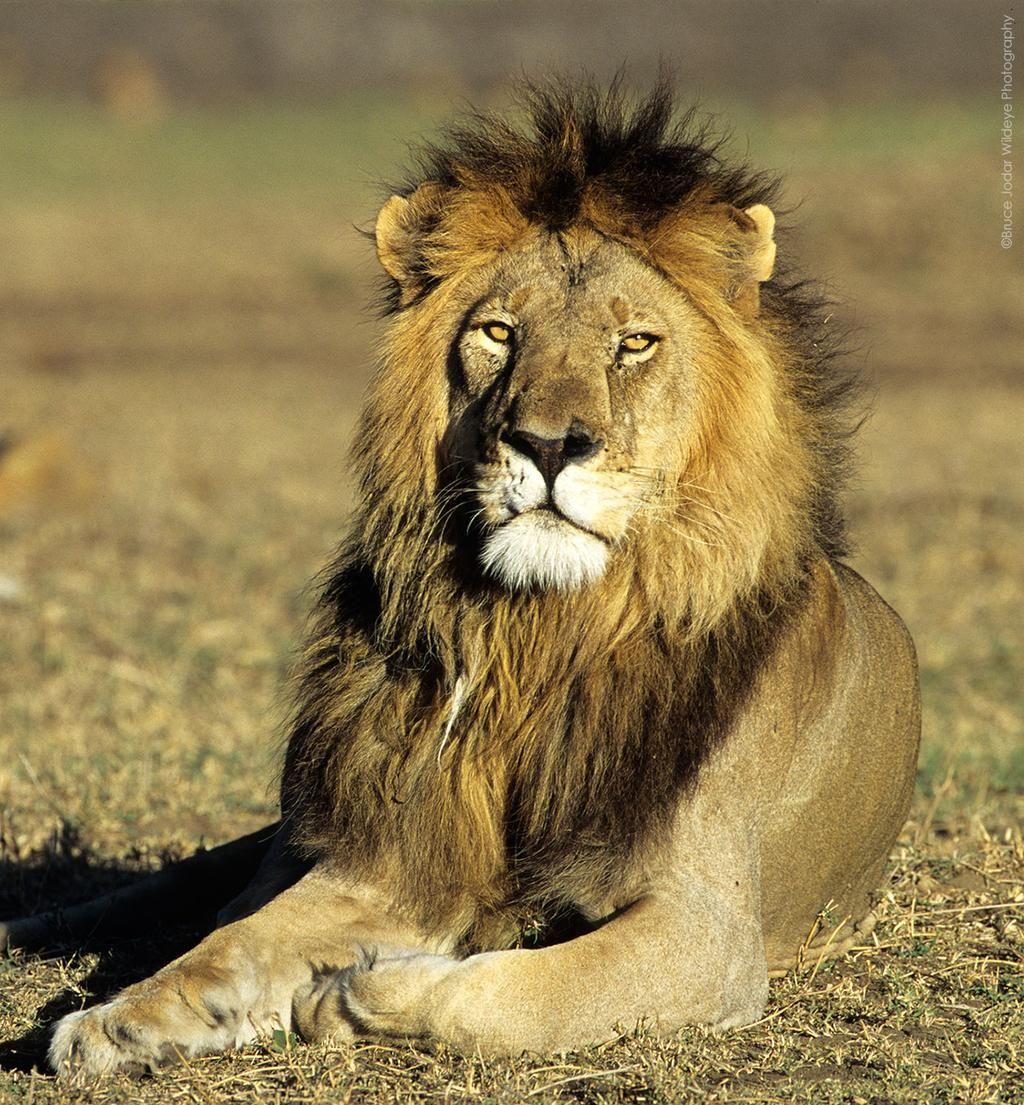 PETA on Wild cats, Animal rights organizations, African