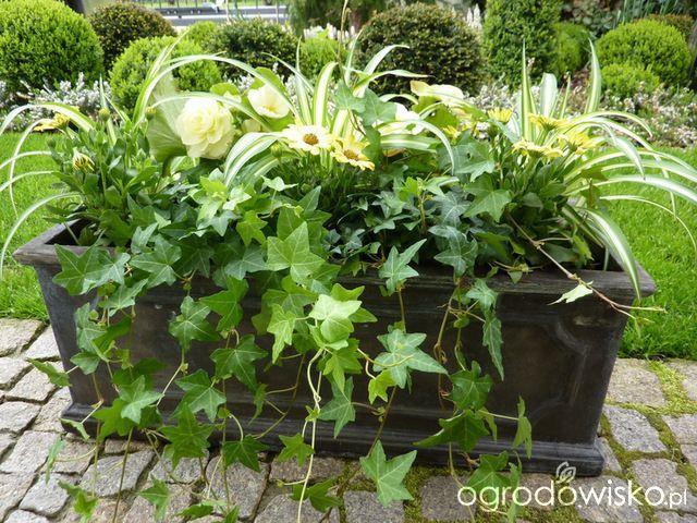 Letnie Skrzynki Balkonowe I Donice Strona 5 Forum Ogrodnicze Ogrodowisko Garden Planter Boxes Garden Planters Plants
