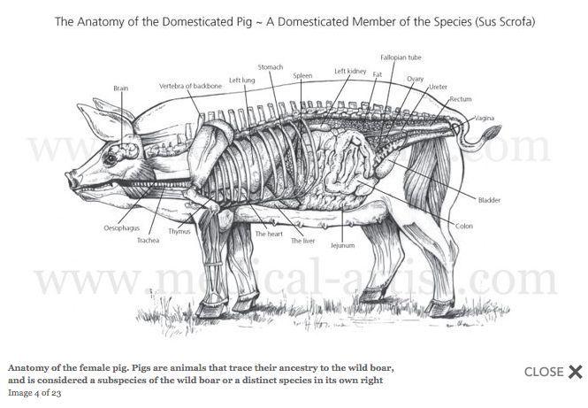 Pin by Katie Turner on woodburning ideas | Pinterest | Anatomy ...