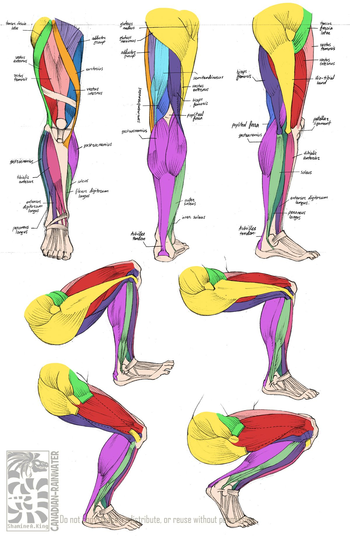 Anatomy - Leg Muscles | Charater design | Pinterest | Menschen ...