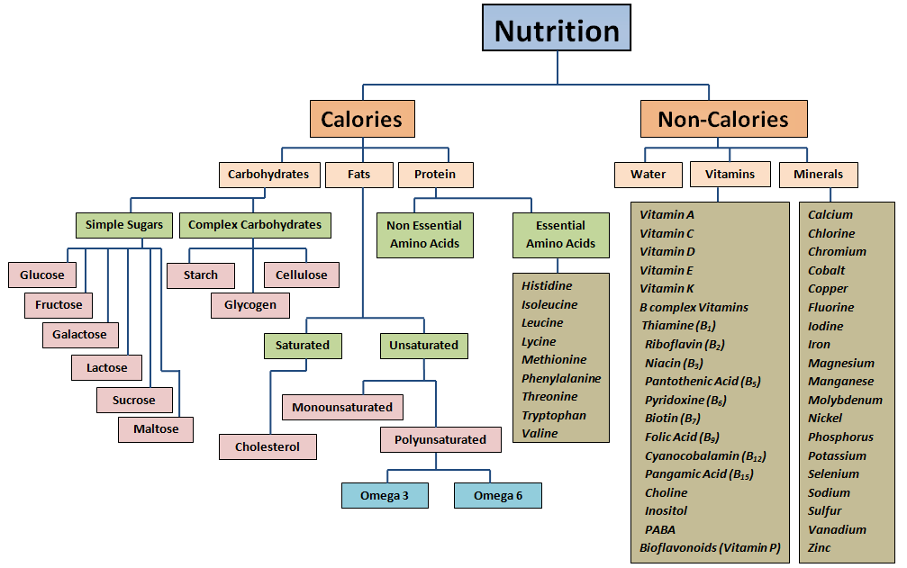 nutrition flow chart