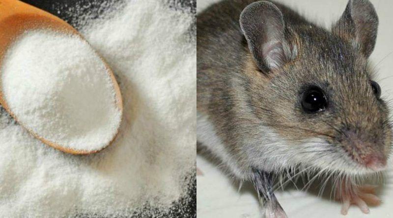 Como Acabar Con Las Ratas En El Jardin Pin En Trucos De Limpieza