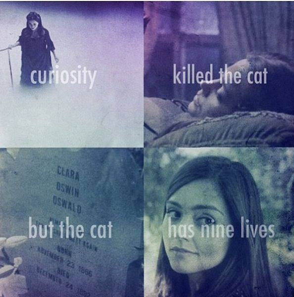 """Curiosity killed the cat, but the cat has nine lives."""