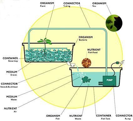 Small scale greenhouse aquaculture google search class for Koi pond hydroponics