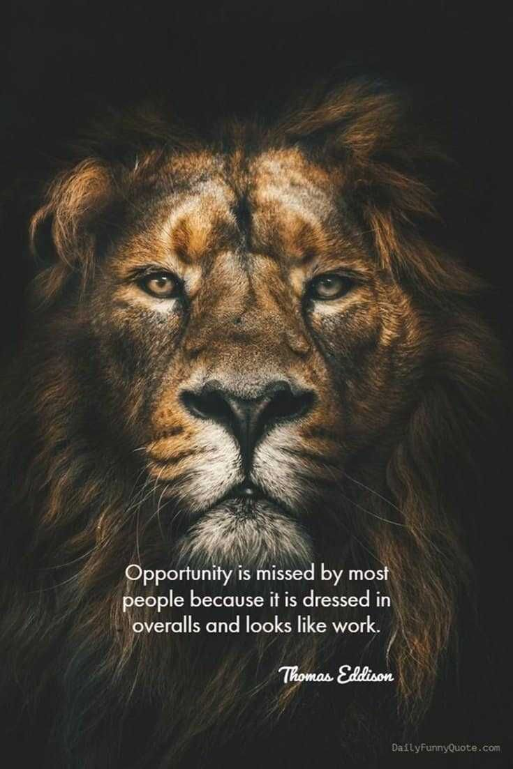 56 Short Inspirational Quotes About Life and Love   Lion ...