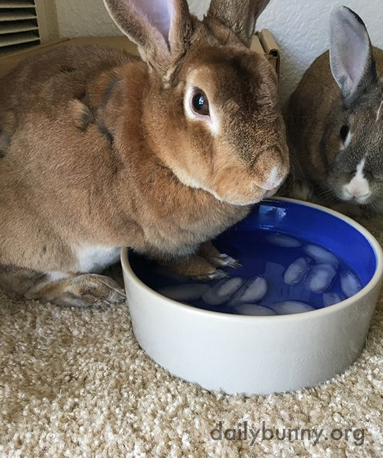 Bunny Knows How To Keep His Paws Cool