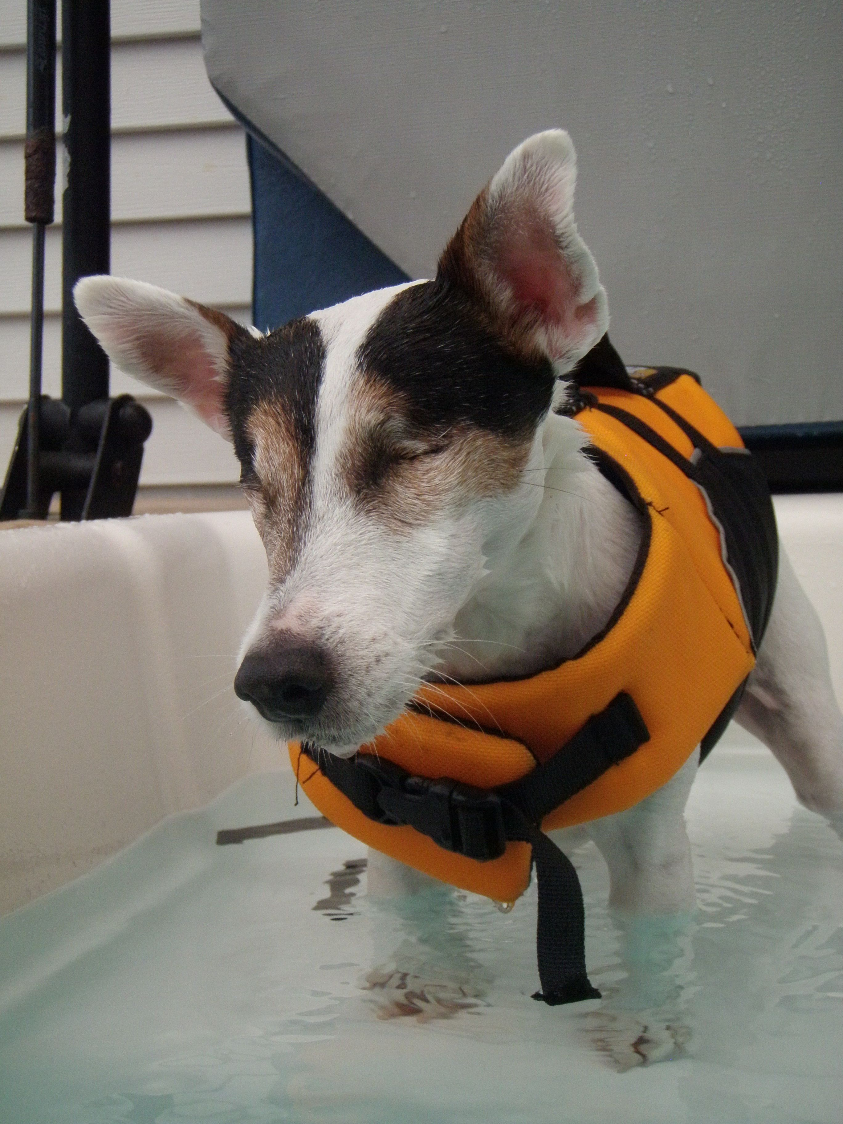 Blind Dogs Can Swim Too Blind Dog Dogs Your Dog