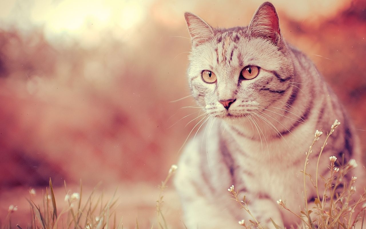 25 High Quality Cat Wallpapers 2015-2016   I am sharing different types of cat wallpapers so you can make choice among all of them