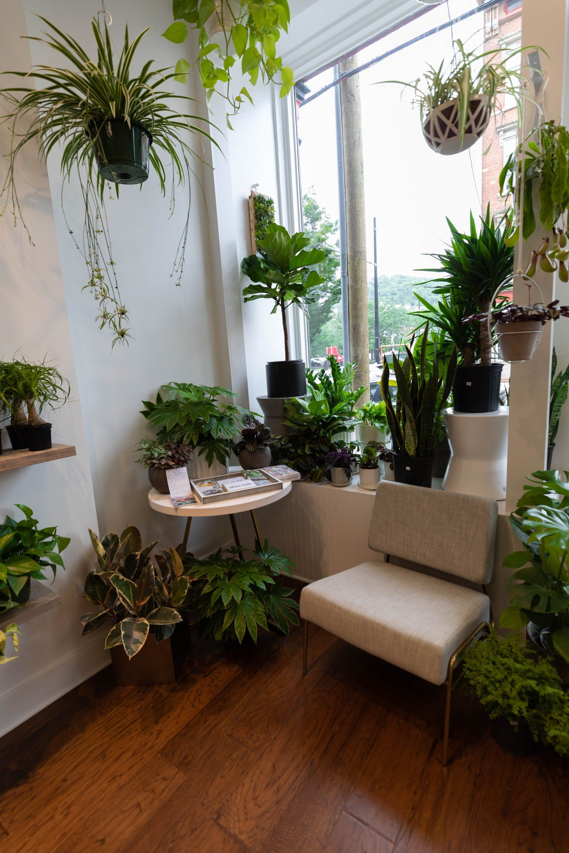Cincinnati The Luxury Travel Guide Annie Fairfax Kitchen Plants Plants Air Purifying House Plants