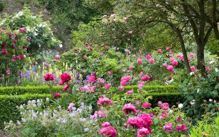 In Pictures Pretty Peonies Rose Garden Design Peonies Garden Rose Garden Landscape
