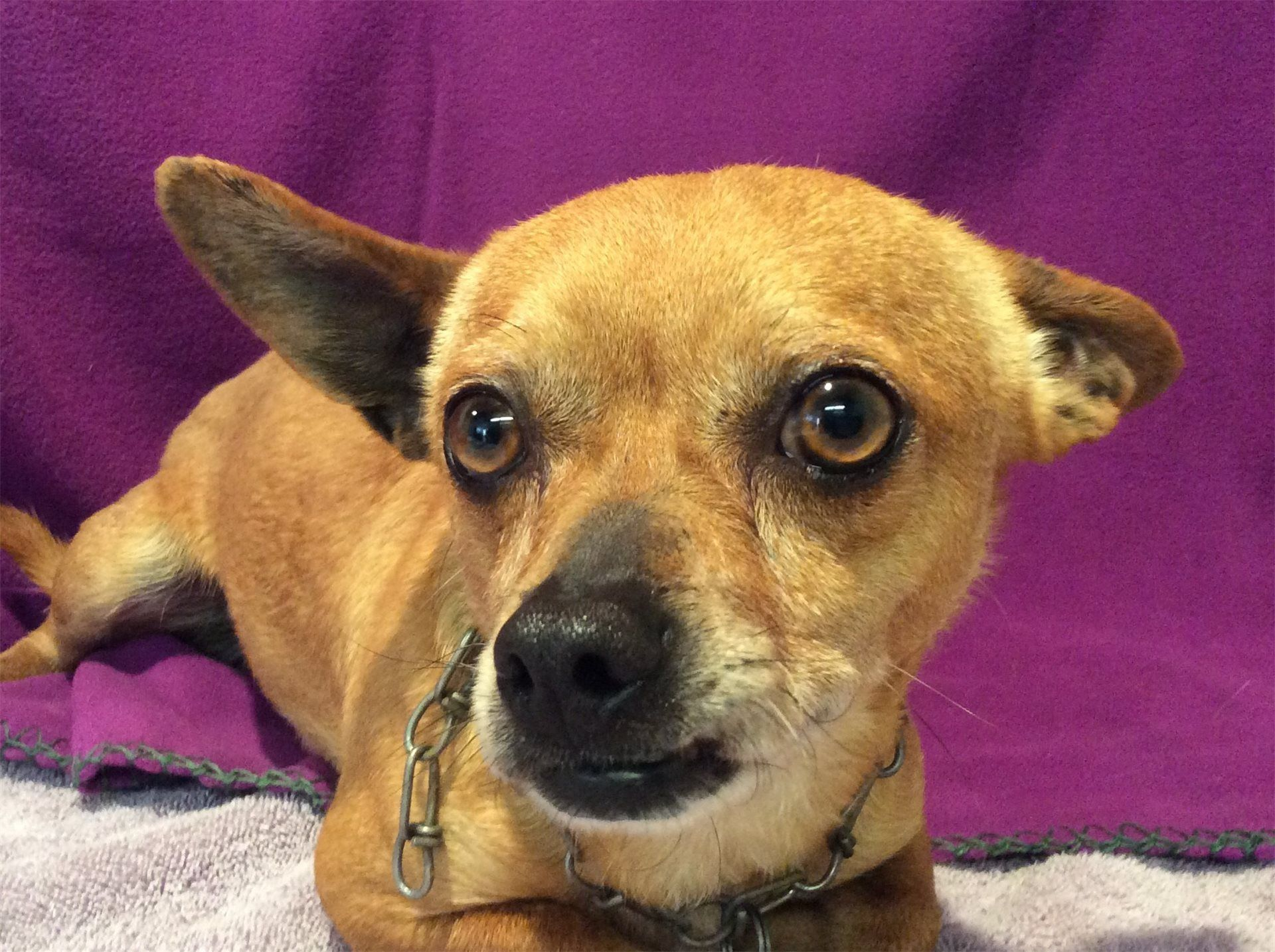Inland Valley Humane Society Dog adoption, Humane