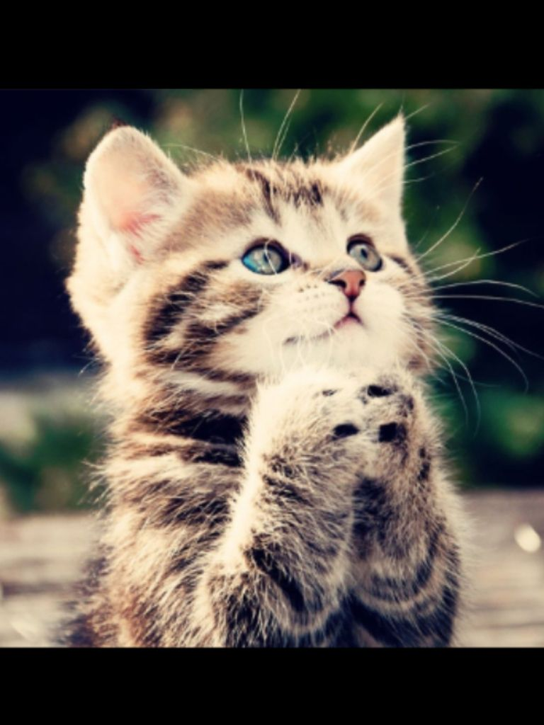 Aww A Kitten Praying Kittens Cutest Kitten Pictures Cute Animals