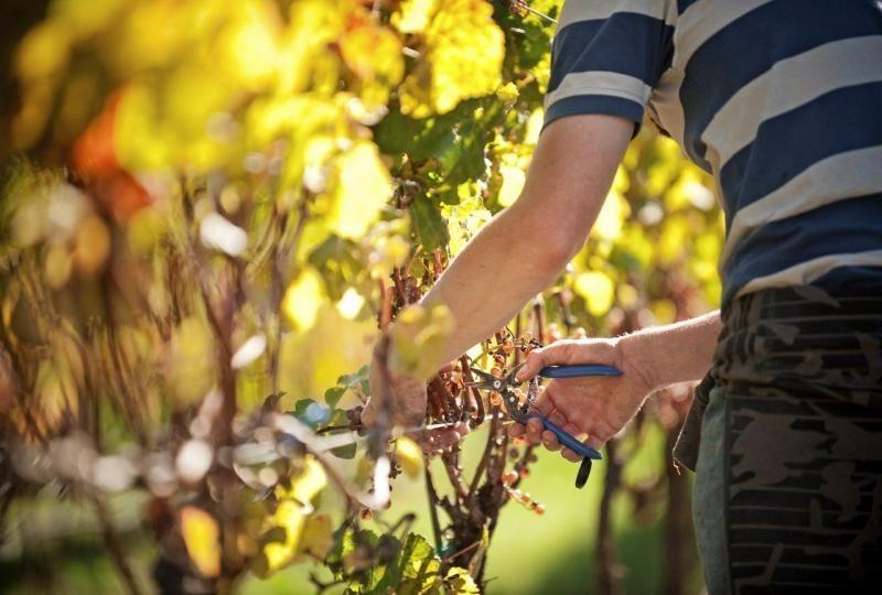 Vinesmart Gladstone Vineyard Wine Vineyards Vineyard Winery