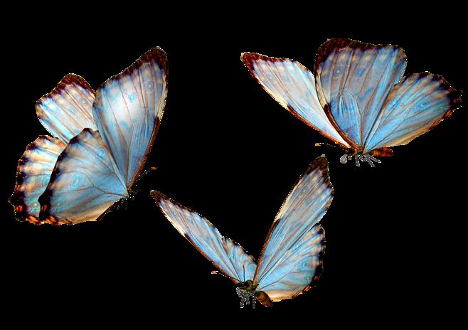 Pin By Clara On A Transparent World Un Monde Transparent Butterfly Clip Art Butterfly Art Butterfly Drawing