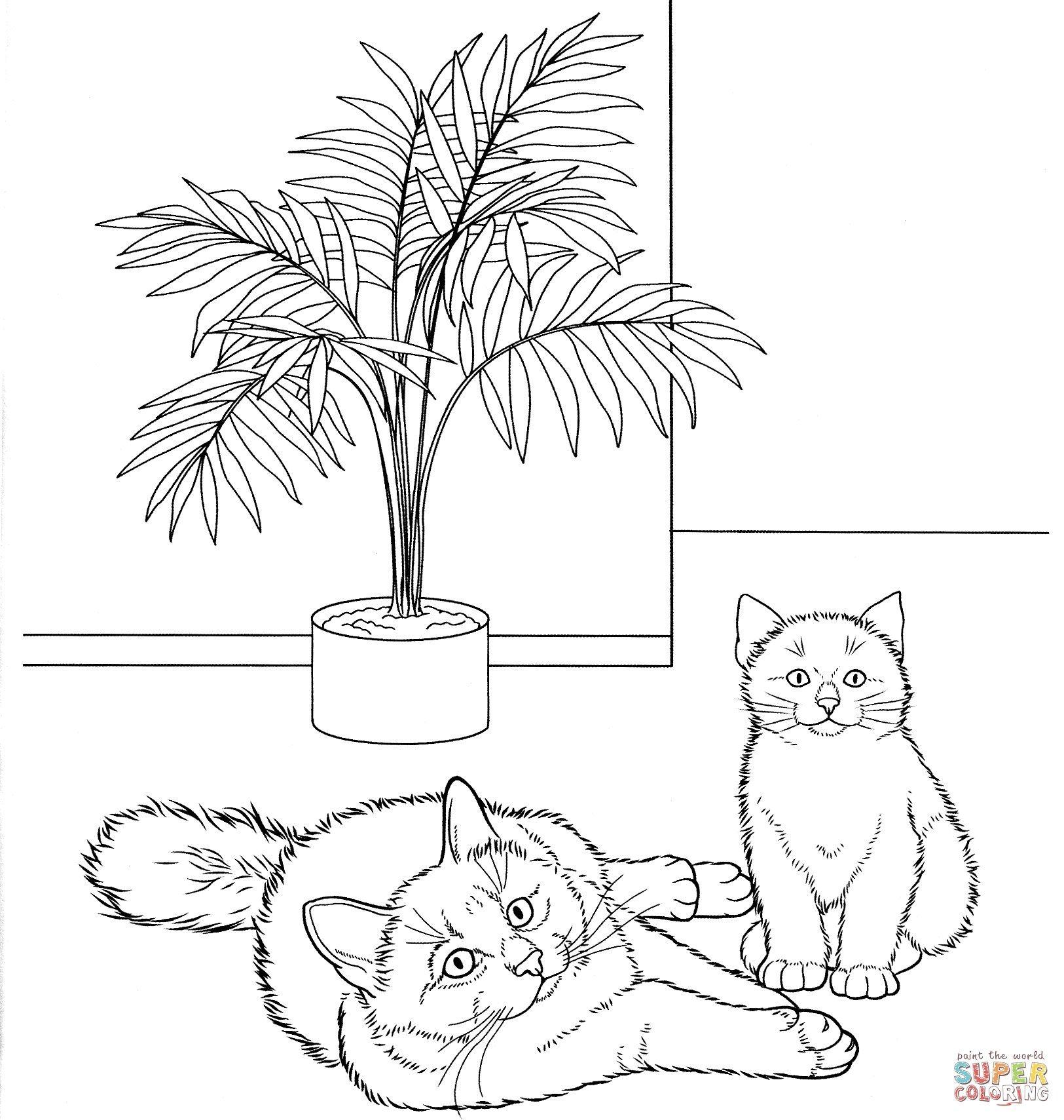 Malvorlagen Babykatzen