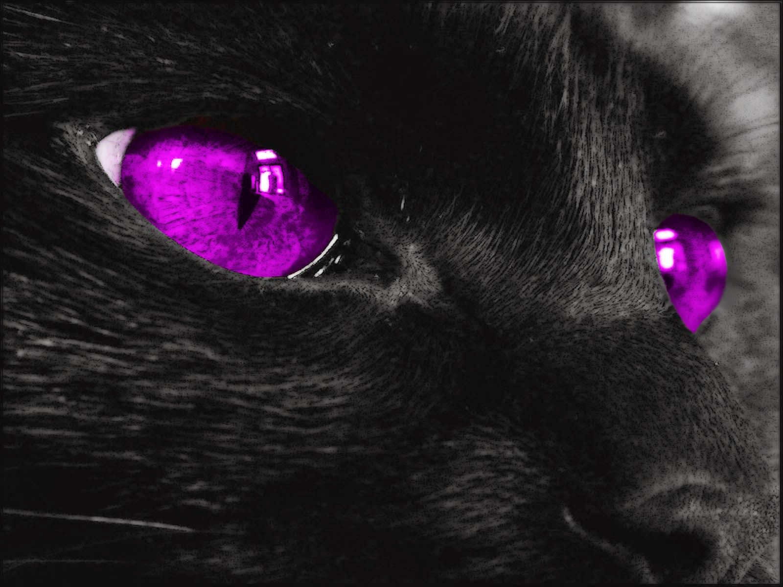 Black Cat With Pink Scary Eyes: Black Cats With Colored Eyes