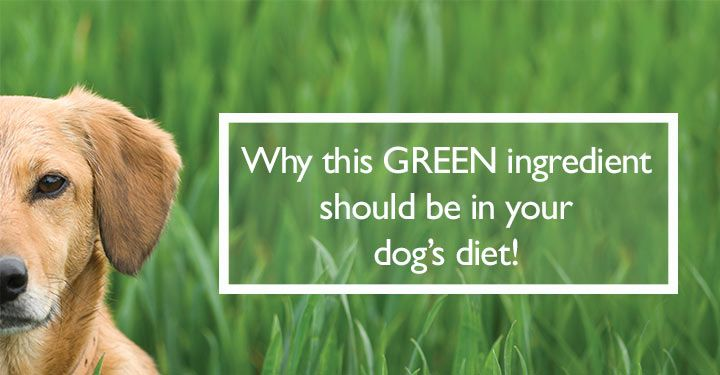 Go Green Team Dogs Naturally Magazine Dogs Dogs Eating Grass