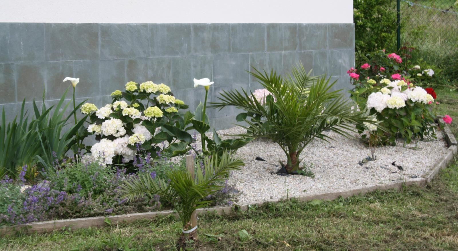 Tipos de palmeras para jardines reducidos2 patios y for Tipos de jardines pequenos