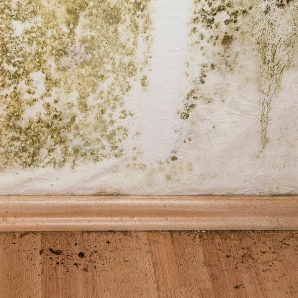 Mold Remediation Cost | Everything and the Kitchen Sink