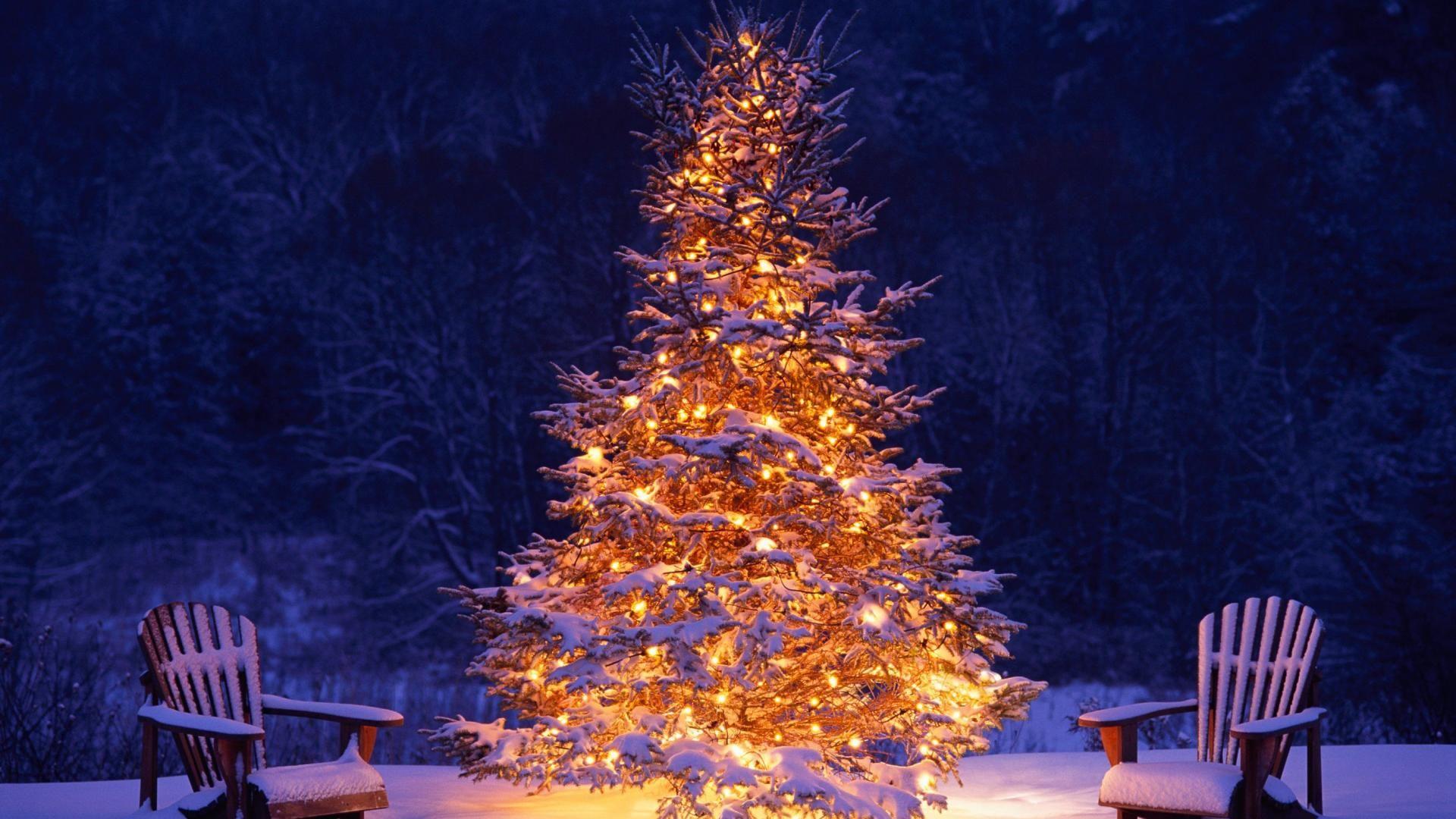 Hd Wallpaper Christmas Tree Snow