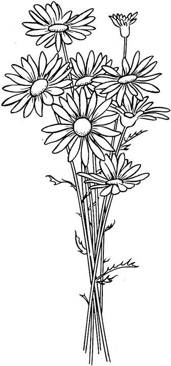 Flower Coloring Page Flower Coloring Pages Daisy Flower Drawing