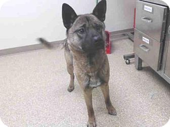 Pin By Ariana Smith On Animals In Trouble Husky Mix Pets Adoption
