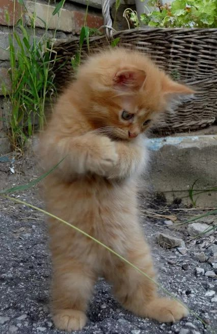 Standing Up For Myself Cute Animals Baby Cats Kittens Cutest