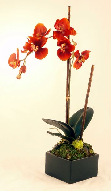 Rust Phalenopsis Orchid With Images Orchid Flower Arrangements Beautiful Orchids Artificial Orchids