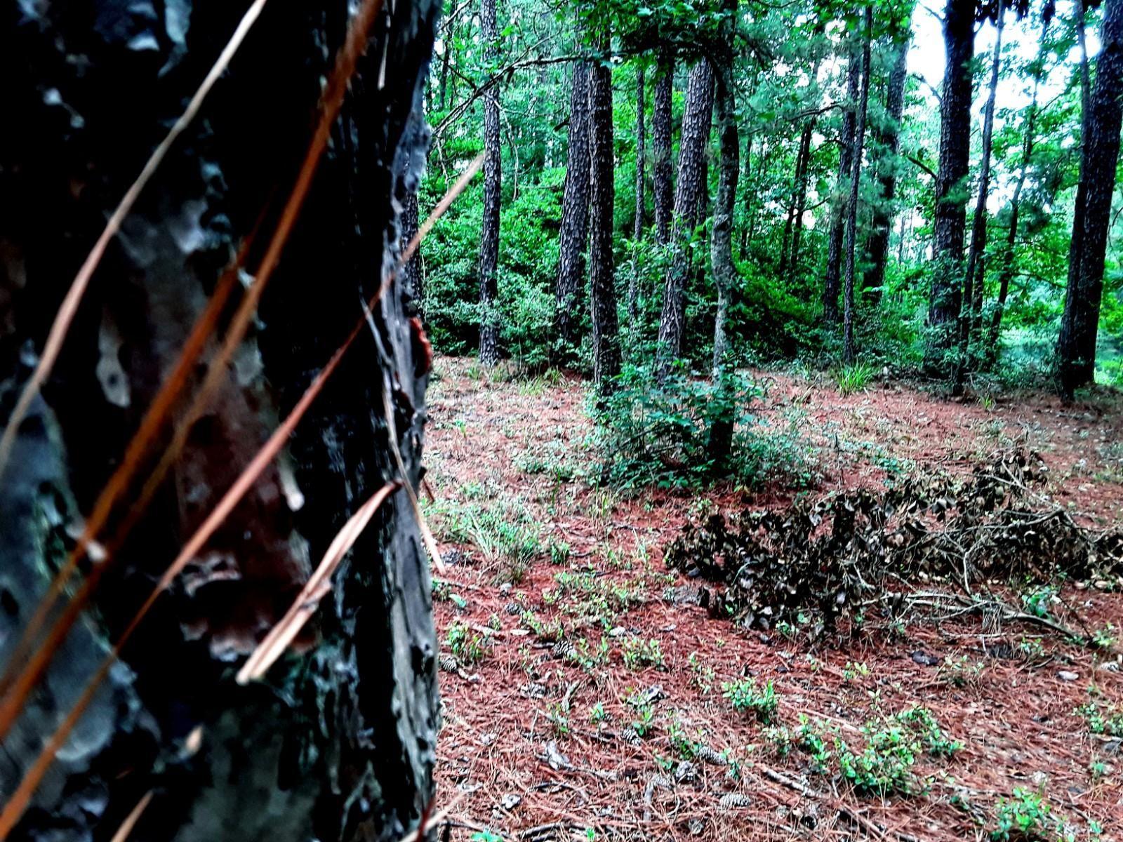 Backwood Forest By Reed 1600x1200 Forest Desktop Background Images Background Images