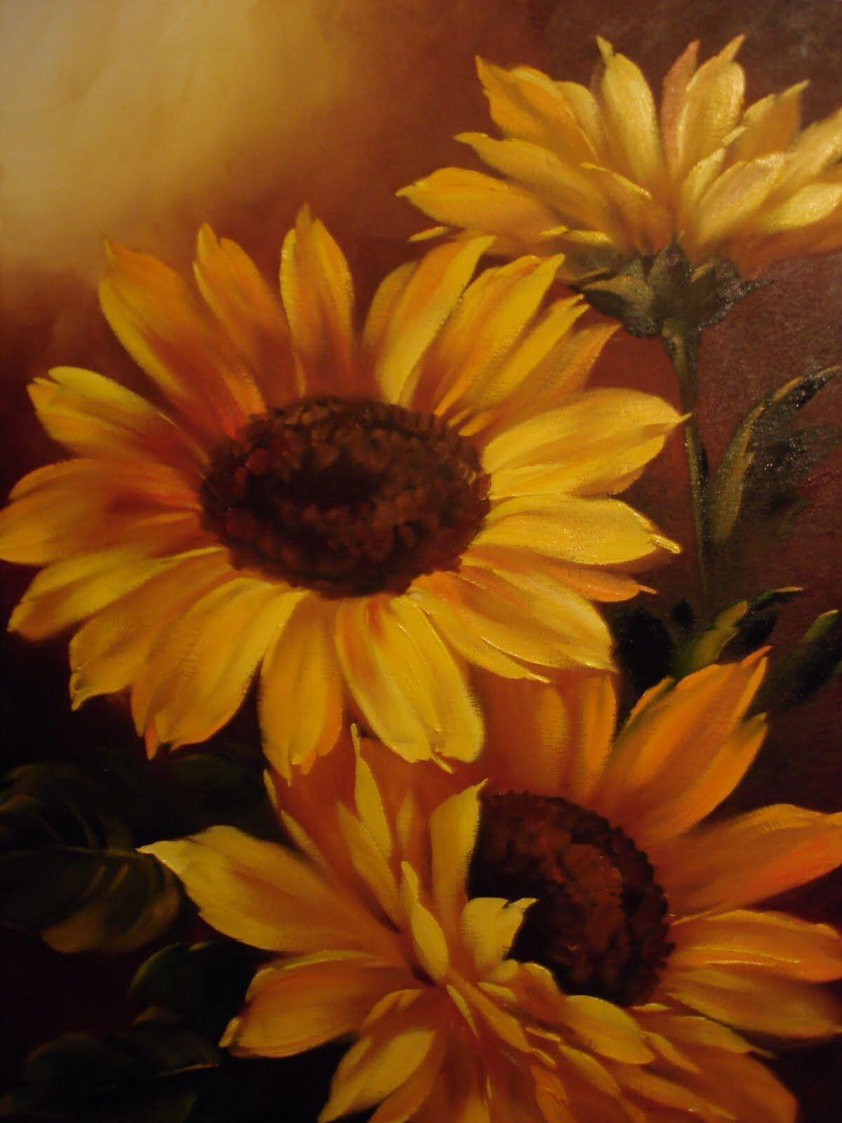 girassol sunflowers in 2019