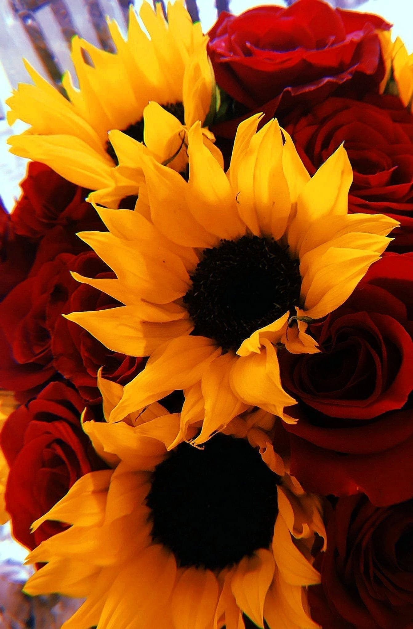 Roses And Sunflowers Background : roses, sunflowers, background, Picture, Sunflowers, Roses, Roses,, Wallpaper,, Sunflower, Wallpaper