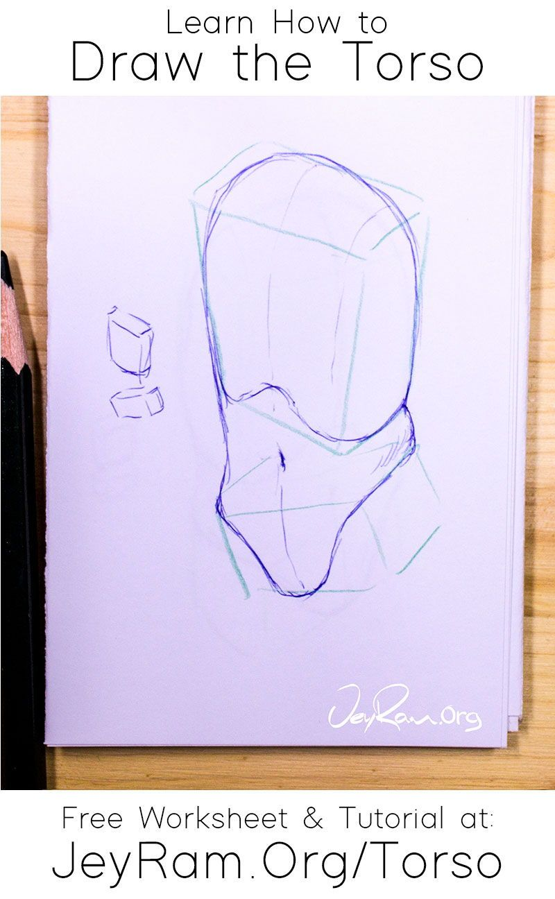Pin On How To Draw The Torso