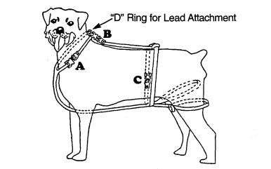 No Jump Dog Harness Product Information With Images Dog