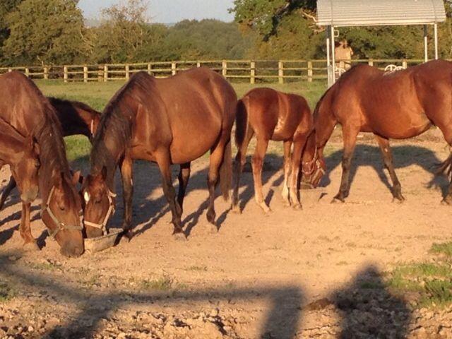 En Normandie, Chez Nath. mon amie et ses chevaux (moments de bonheur)