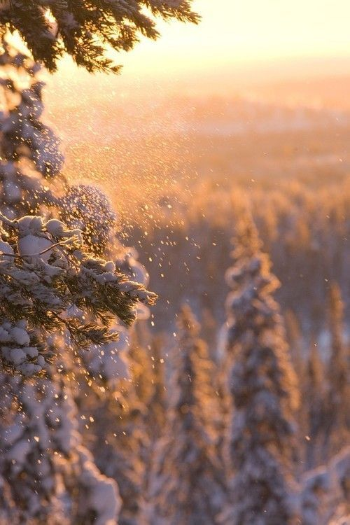 Sunset Snow from Rawr - Niusha Alizadeh - #cold #frost #ice #snow #snowfall #snowing #winter - Sunset Snow from Rawr Sunset Snow from Rawr