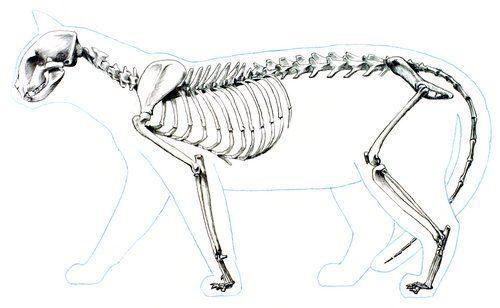 fail cat skeleton doodle - photo #36