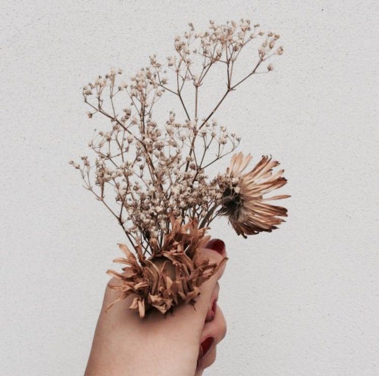 Pin Oleh Christel Michiels Di Katniss Everdeen Bingkai Bunga Gambar Bunga