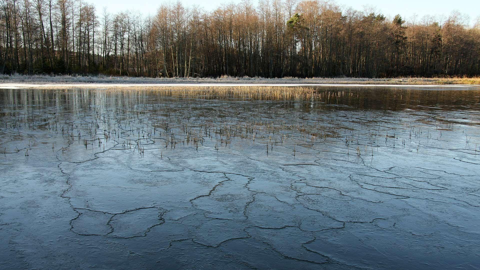 Talven tullen vedet kylmenevät ja vetäytyvät lopulta jäähän. Jäätyminen alkaa jääkiteistä, jotka syntyvät usein joidenkin pienten hiukkasten, kuten vaikkapa veden päällä kelluvien siementen tai kasvinosien ympärille. (Video 2 min.)