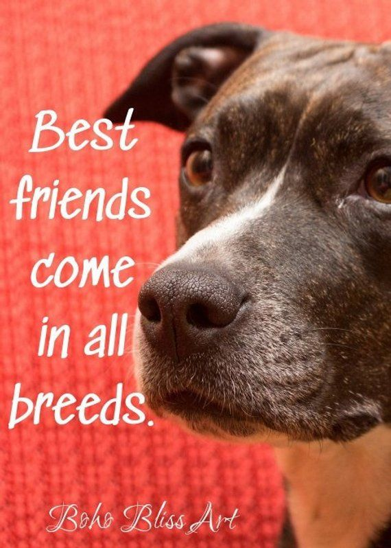 Best Friends Come In All Breeds Dog Quote And Art Print Animal New Download Good Quote About Dog