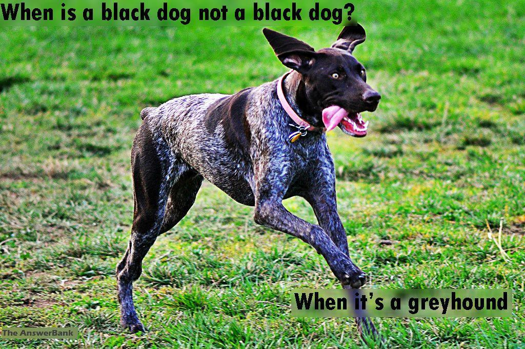 Funny Dog Joke Pitbull Dog Harness Pitbull Dog Dog Training