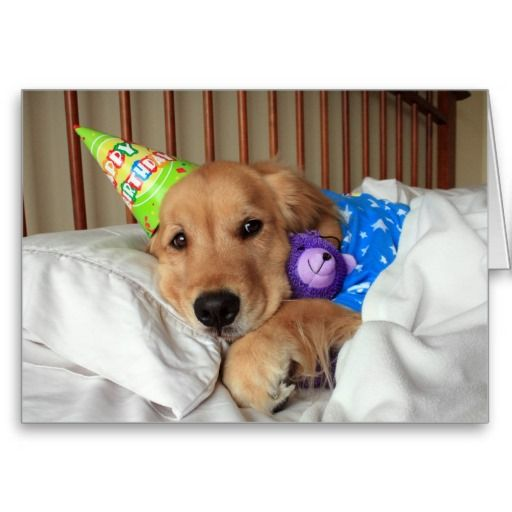 Sleepy Golden Retriever In Pajamas Birthday Card Zazzle Com